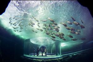 Крупнейший в мире океанариум открывается в Сингапуре