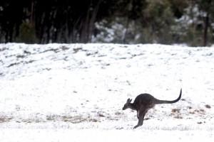 Штат Южной Австралии засыпан снегом.