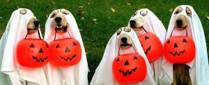 В Стокгольме пройдет парад-фестиваль, посвященный Хеллоуину