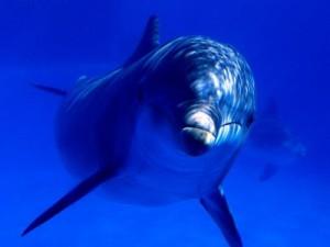 Новый центр дельфинотерапии открыт в Крыму