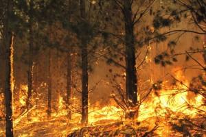 Массовые пожары в Австралии