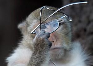 На курортах Тайланда обезьяны терроризируют отдыхающих