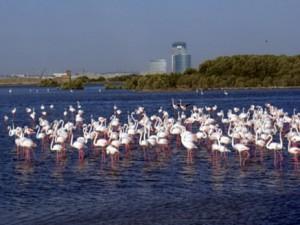 В Дубае открылся новый водный маршрут для туристов