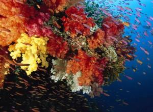 Власти Филиппин требуют у США возмещения ущерба, нанесенного коралловым рифам