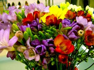 Уникальный праздник цветов пройдет в Колумбии