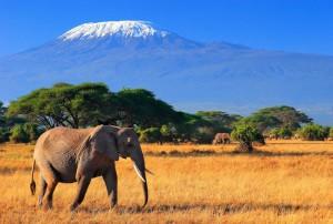 С января 2014 года посещать африканские страны можно будет по единой въездной визе