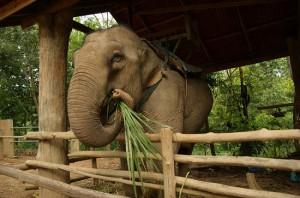 Таиланд – страна, выгодная для отдыха с детьми